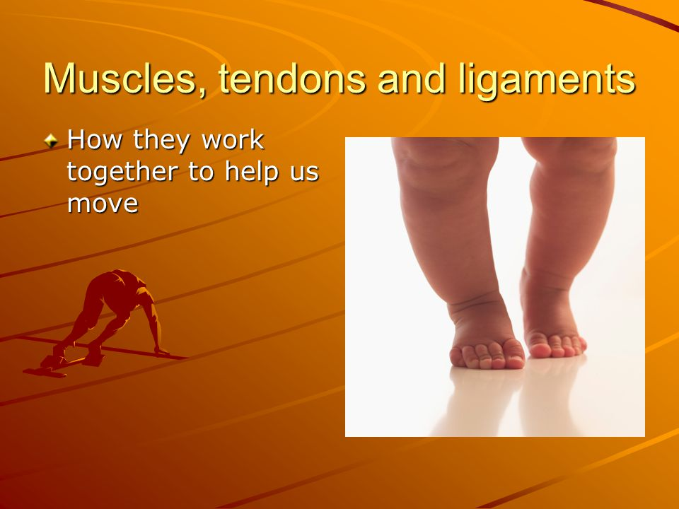 Muscles, tendons and ligaments How they work together to help us move