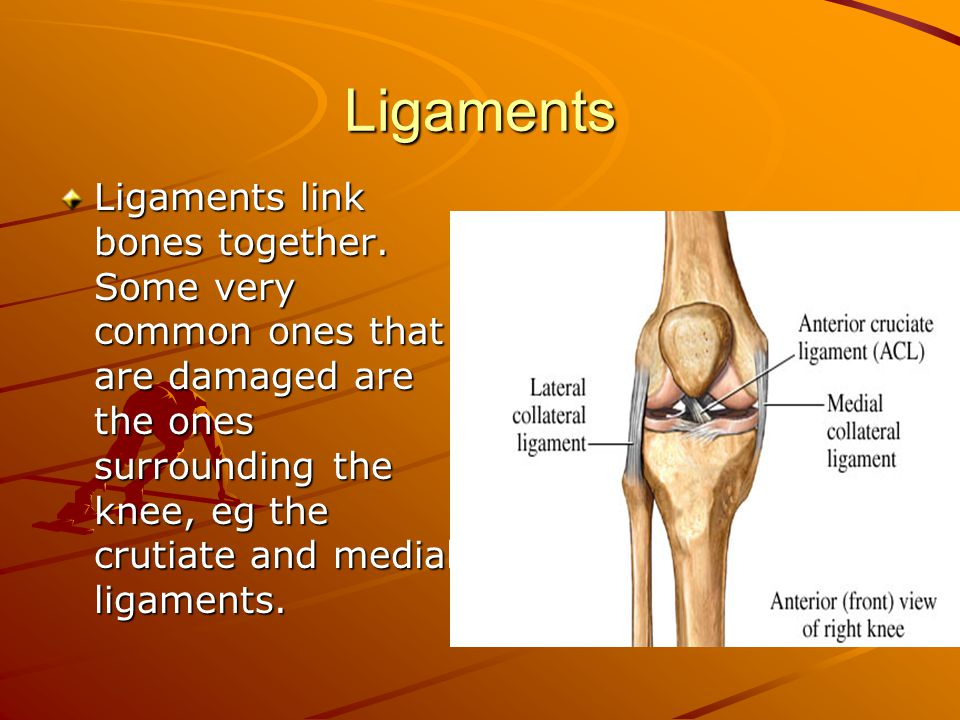 Ligaments Ligaments link bones together. Some very common ones that are damaged are the ones surrounding the knee, eg the crutiate and medial ligament
