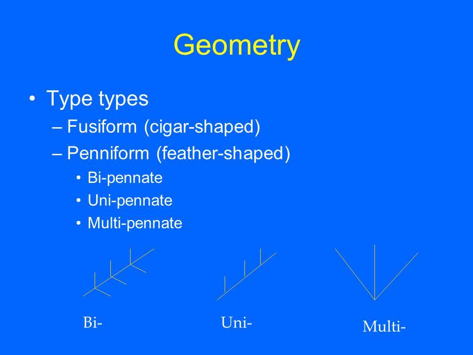 Geometry Type types –Fusiform (cigar-shaped) –Penniform (feather-shaped) Bi-pennate Uni-pennate Multi-pennate Bi-Uni- Multi-