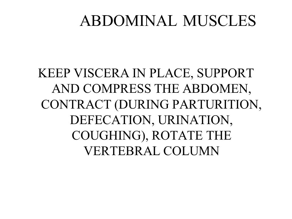 ABDOMINAL MUSCLES KEEP VISCERA IN PLACE, SUPPORT AND COMPRESS THE ABDOMEN, CONTRACT (DURING PARTURITION, DEFECATION, URINATION, COUGHING), ROTATE THE VERTEBRAL COLUMN