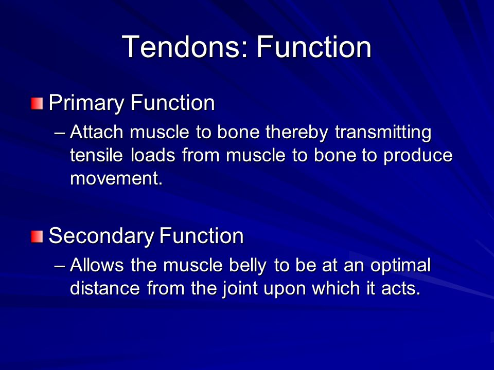 Tendons: Function Primary Function –Attach muscle to bone thereby transmitting tensile loads from muscle to bone to produce movement.