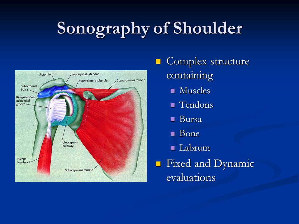 Sonography of Shoulder Complex structure containing Muscles Tendons Bursa Bone Labrum Fixed and Dynamic evaluations
