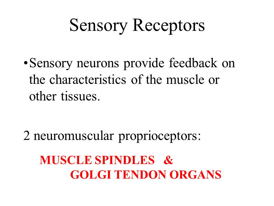 Sensory Receptors Sensory neurons provide feedback on the characteristics of the muscle or other tissues.
