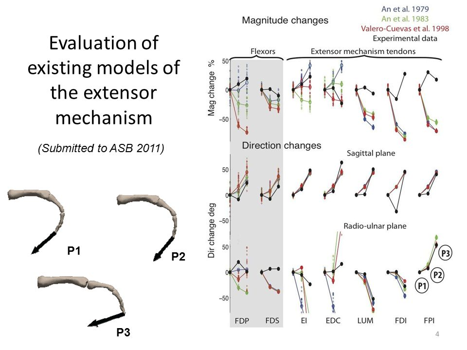 Evaluation of existing models of the extensor mechanism 4 (Submitted to ASB 2011) P1 P2 P3