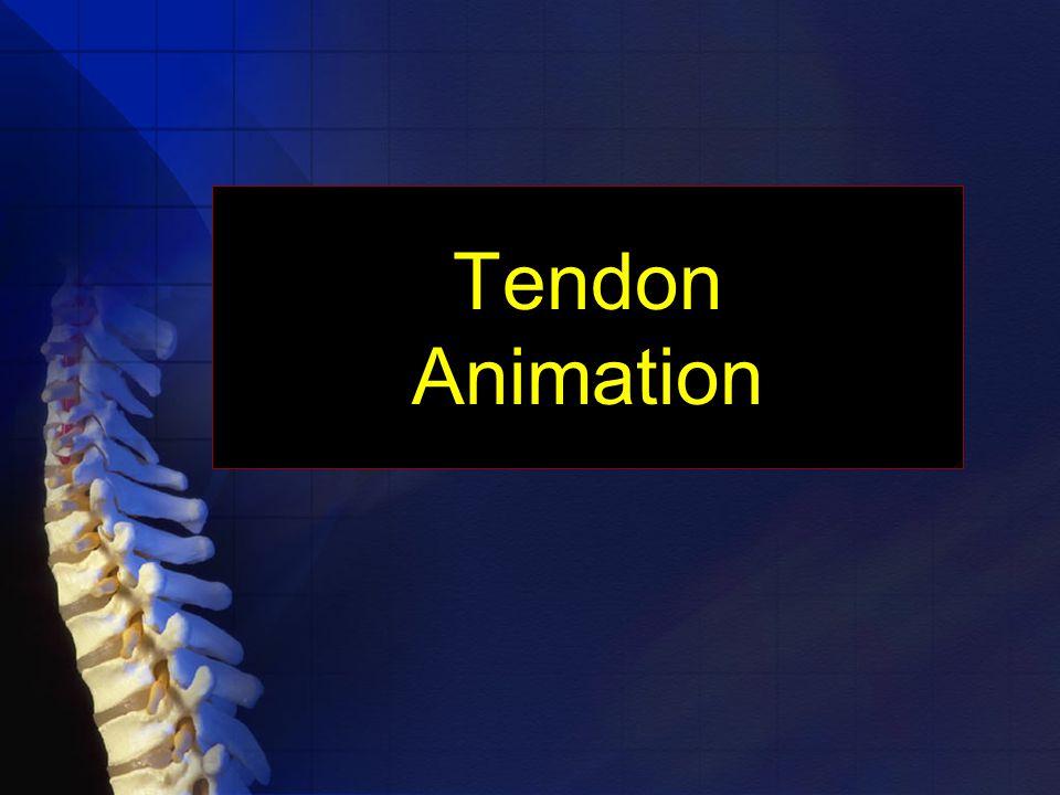 Tendon Animation