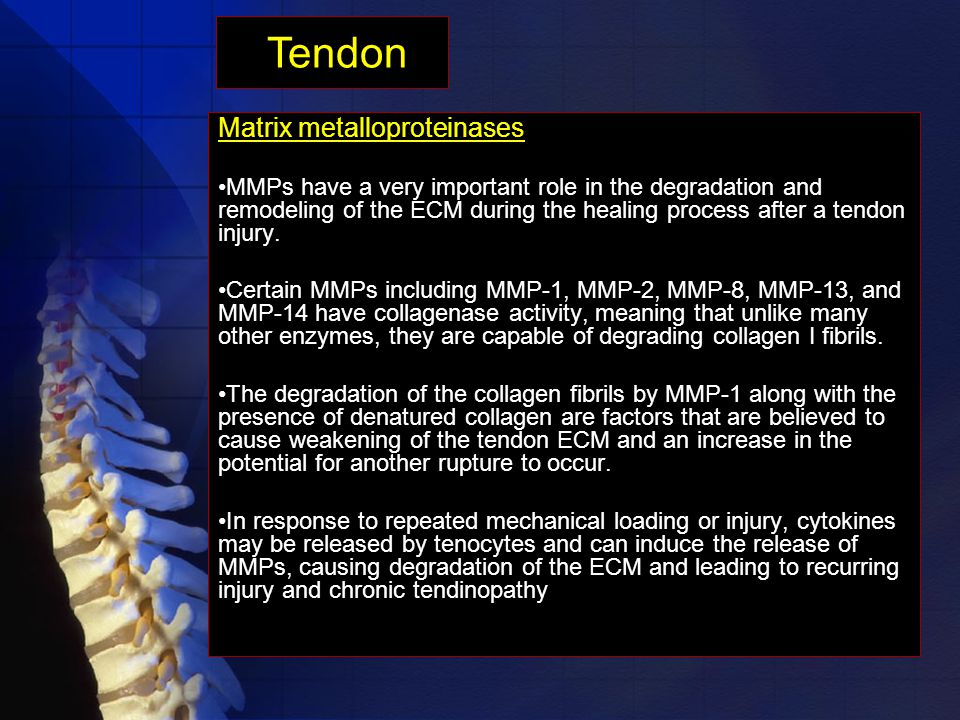 Matrix metalloproteinases MMPs have a very important role in the degradation and remodeling of the ECM during the healing process after a tendon injury.