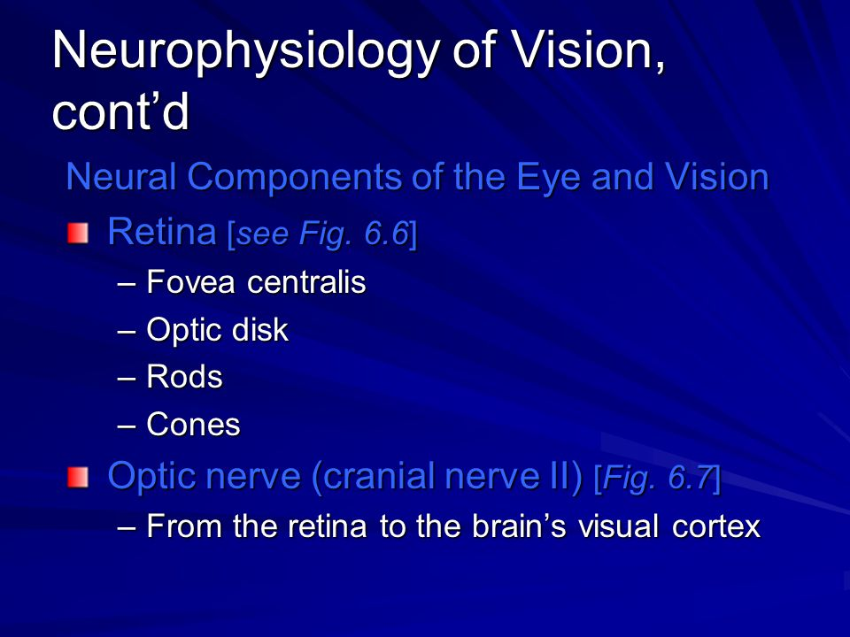 Neurophysiology of Vision, cont'd Neural Components of the Eye and Vision Retina [see Fig. 6.6] –Fovea centralis –Optic disk –Rods –Cones Optic nerve