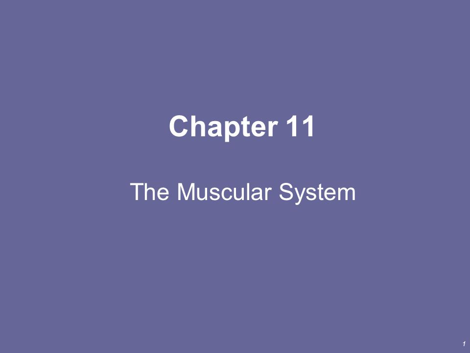 1 Chapter 11 The Muscular System