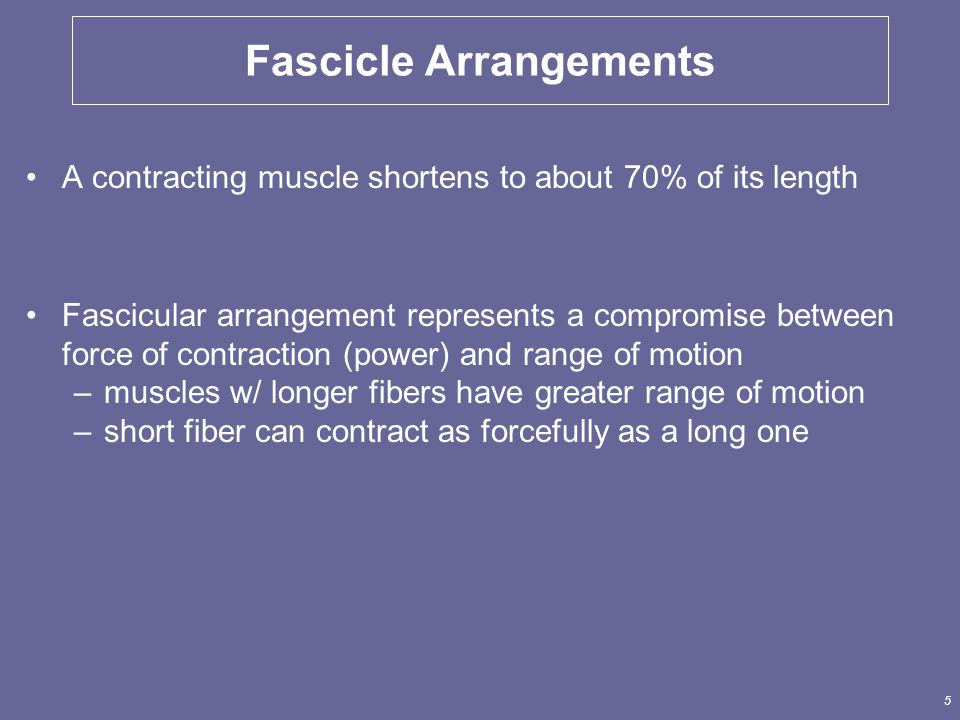 5 Fascicle Arrangements A contracting muscle shortens to about 70% of its length Fascicular arrangement represents a compromise between force of contraction (power) and range of motion –muscles w/ longer fibers have greater range of motion –short fiber can contract as forcefully as a long one