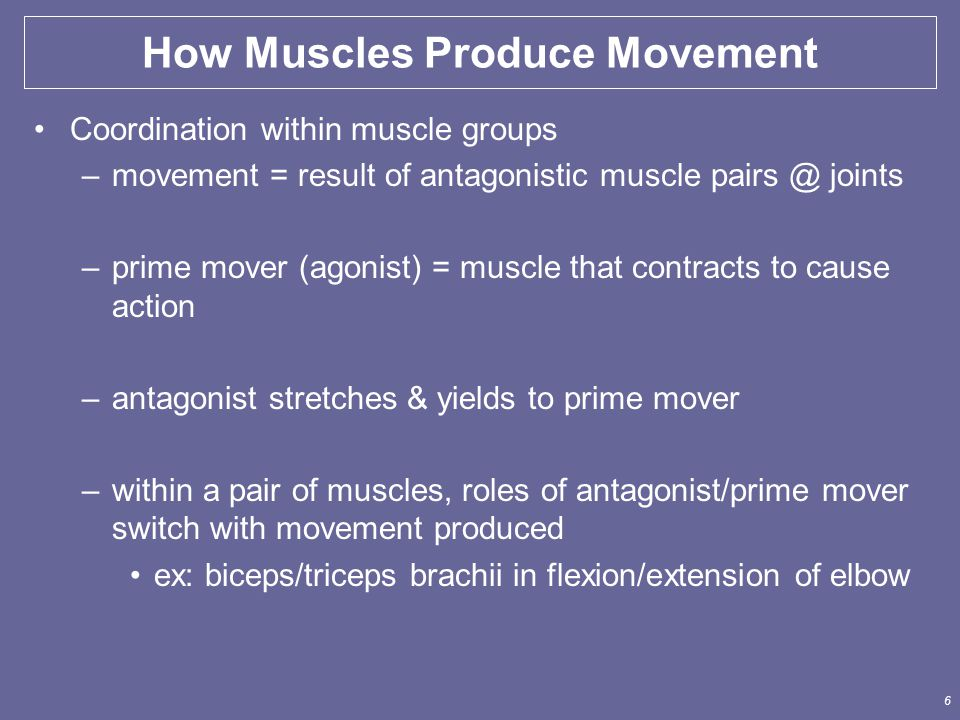 6 Coordination within muscle groups –movement = result of antagonistic muscle pairs @ joints –prime mover (agonist) = muscle that contracts to cause a