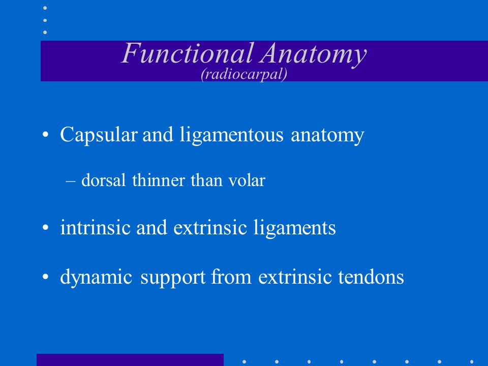 Functional Anatomy (radiocarpal) Intercalated bone in a bimuscular, biarticular system control by –flexor tendons –extensor tendons –scaphoid zigzag collapse in three link system with only two controls
