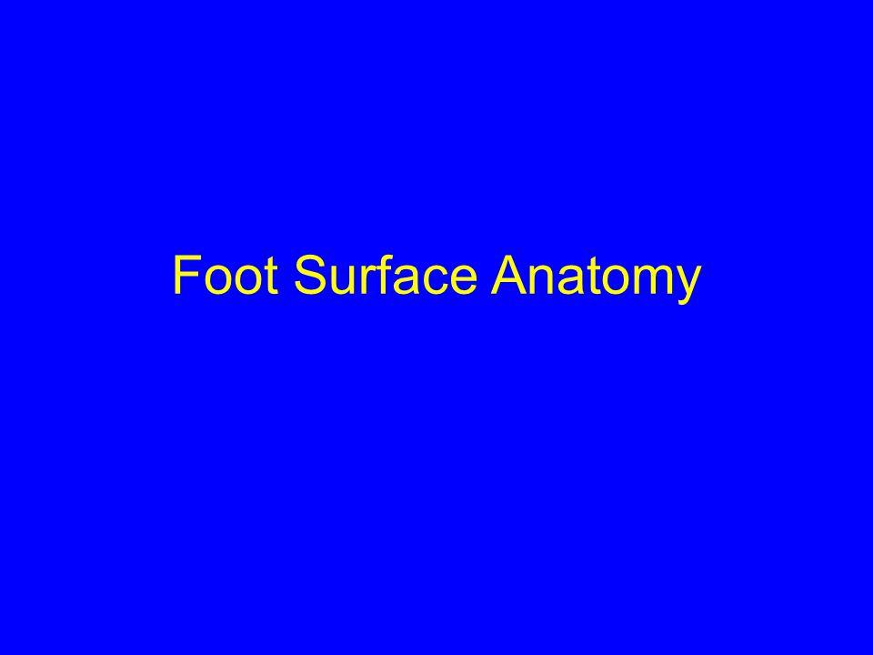 Foot Surface Anatomy