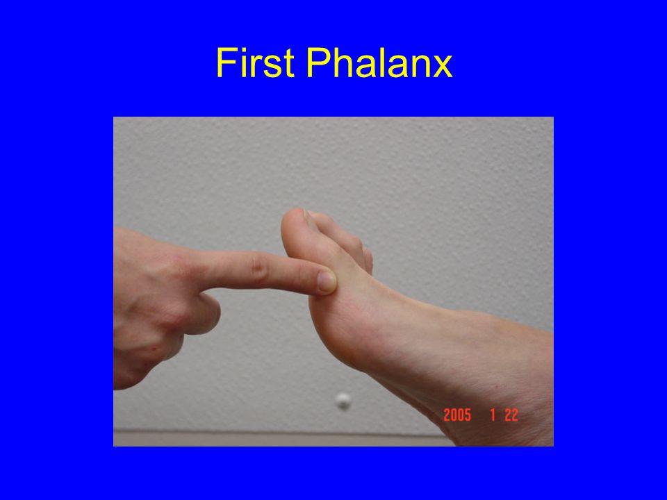 First Phalanx