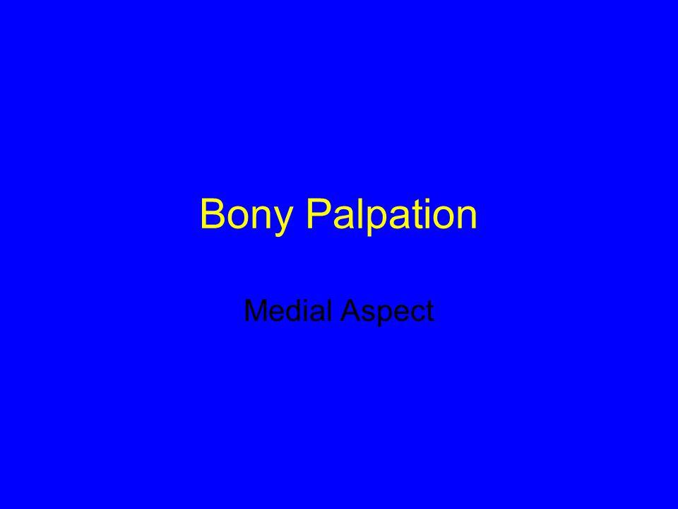 Bony Palpation Medial Aspect