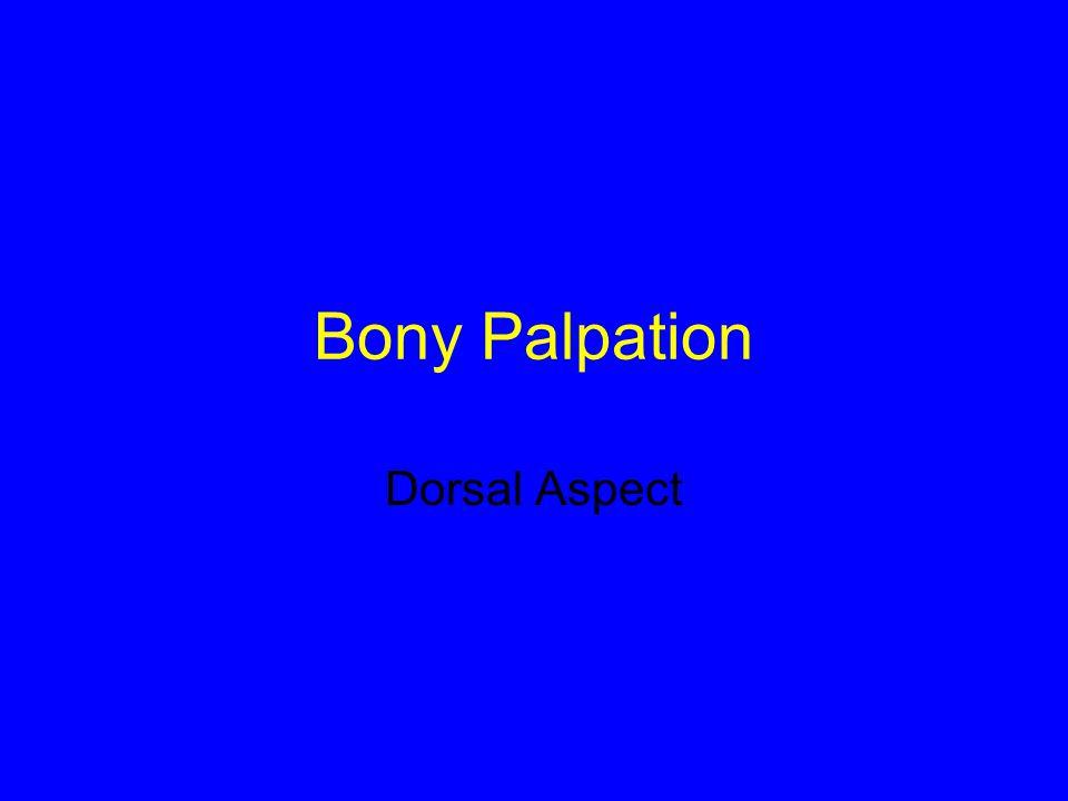 Bony Palpation Dorsal Aspect