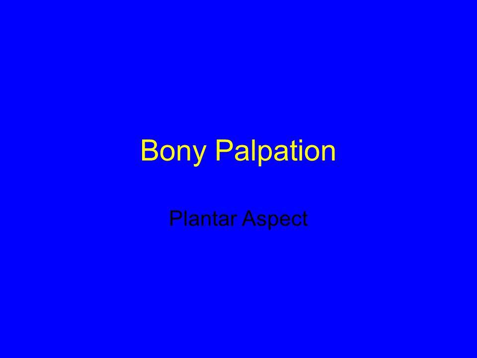 Bony Palpation Plantar Aspect