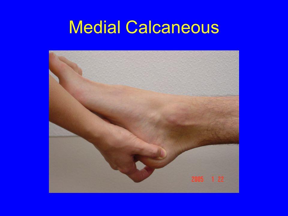 Medial Calcaneous