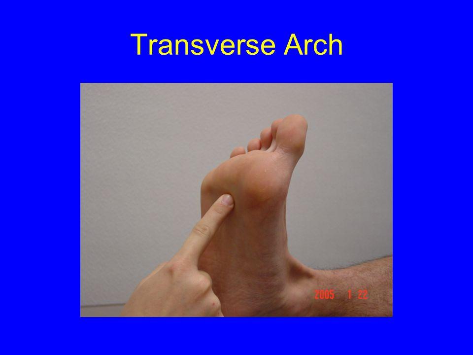 Transverse Arch