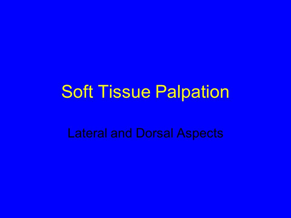Soft Tissue Palpation Lateral and Dorsal Aspects
