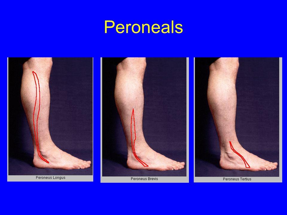 Peroneals