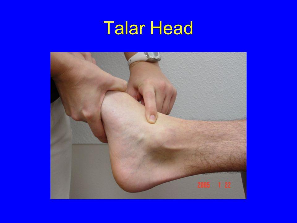 Talar Head