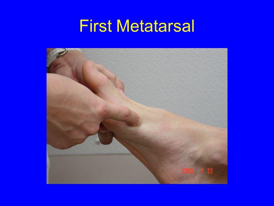 First Metatarsal