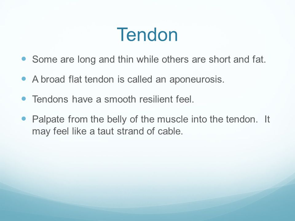 Tendon Some are long and thin while others are short and fat. A broad flat tendon is called an aponeurosis. Tendons have a smooth resilient feel. Palp
