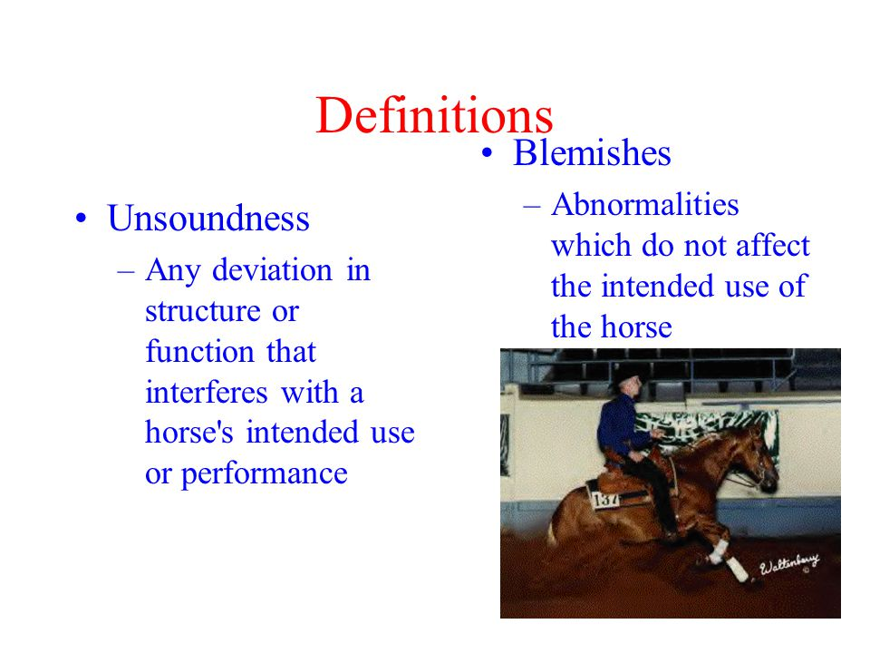 Definitions Unsoundness –Any deviation in structure or function that interferes with a horse s intended use or performance Blemishes –Abnormalities which do not affect the intended use of the horse