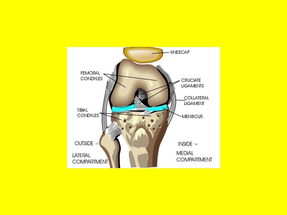 Complains of pain on knee flexion May complain of snapping Pain gets worse on ROM from full flexion to full extension.