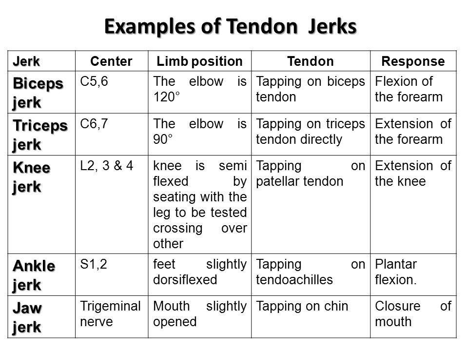 Examples of Tendon Jerks JerkCenterLimb positionTendonResponse Biceps jerk C5,6The elbow is 120° Tapping on biceps tendon Flexion of the forearm Triceps jerk C6,7The elbow is 90° Tapping on triceps tendon directly Extension of the forearm Knee jerk L2, 3 & 4knee is semi flexed by seating with the leg to be tested crossing over other Tapping on patellar tendon Extension of the knee Ankle jerk S1,2feet slightly dorsiflexed Tapping on tendoachilles Plantar flexion.
