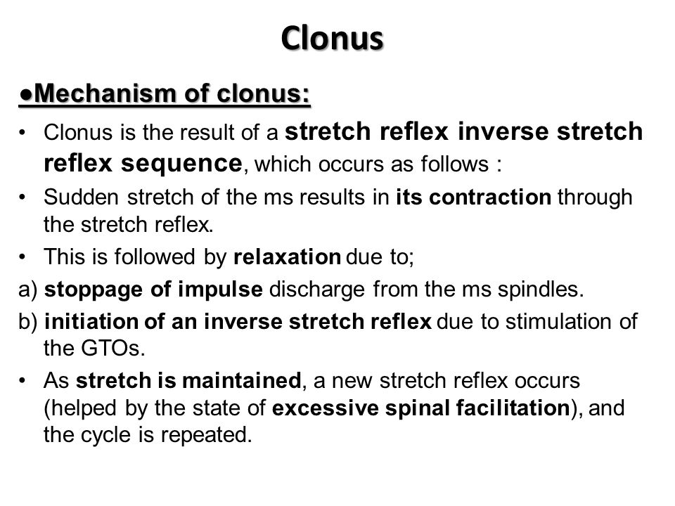 Clonus ●Mechanism of clonus: Clonus is the result of a stretch reflex inverse stretch reflex sequence, which occurs as follows : Sudden stretch of the ms results in its contraction through the stretch reflex.