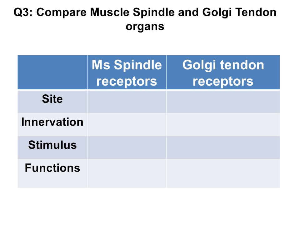 Q3: Compare Muscle Spindle and Golgi Tendon organs Ms Spindle receptors Golgi tendon receptors Site Innervation Stimulus Functions
