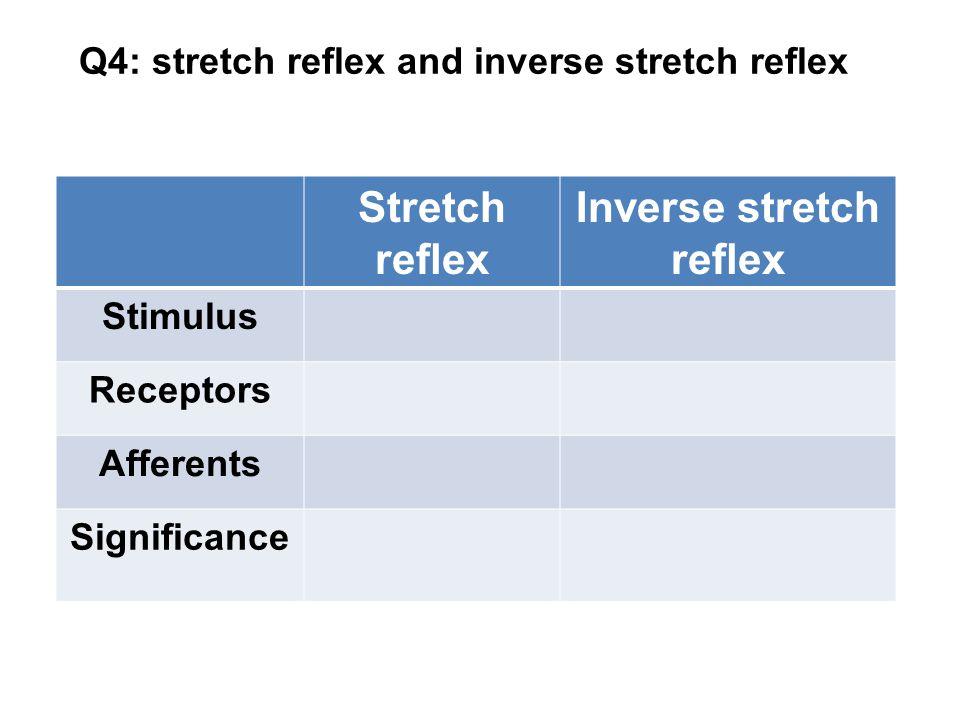 Q4: stretch reflex and inverse stretch reflex Stretch reflex Inverse stretch reflex Stimulus Receptors Afferents Significance
