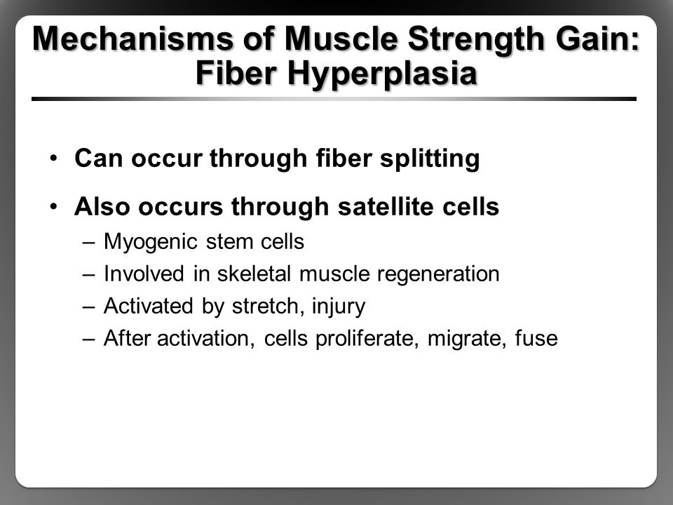Mechanisms of Muscle Strength Gain: Fiber Hyperplasia Can occur through fiber splitting Also occurs through satellite cells –Myogenic stem cells –Involved in skeletal muscle regeneration –Activated by stretch, injury –After activation, cells proliferate, migrate, fuse