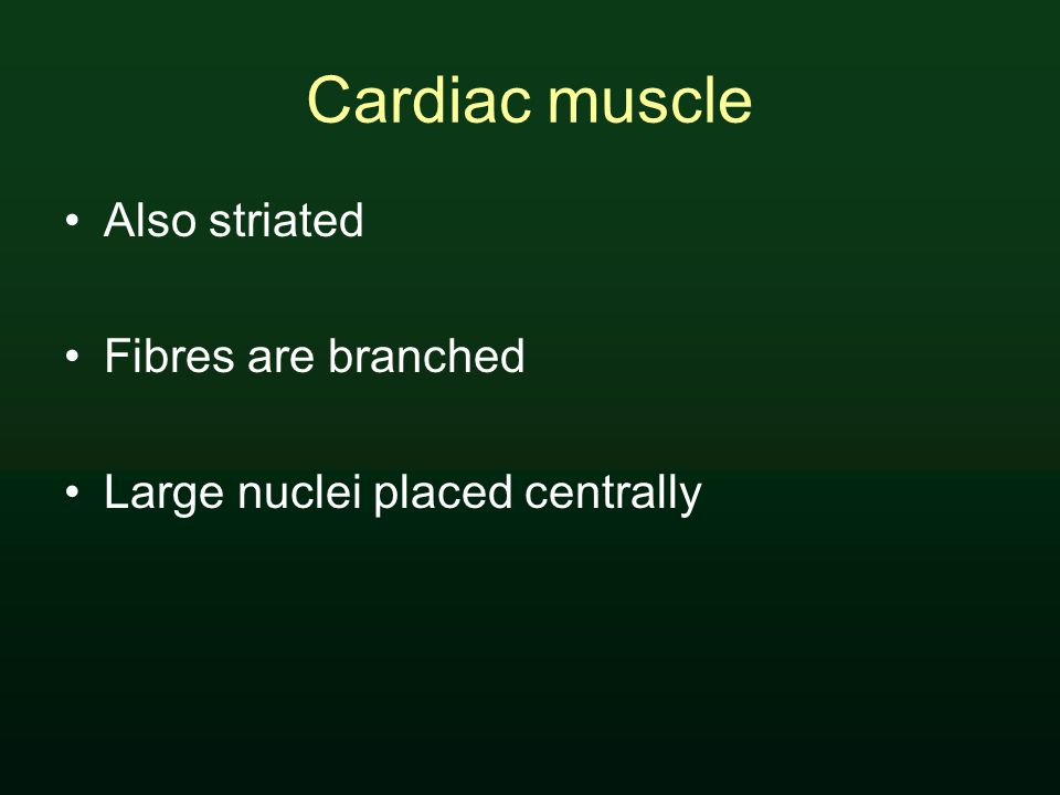 Cardiac muscle Also striated Fibres are branched Large nuclei placed centrally