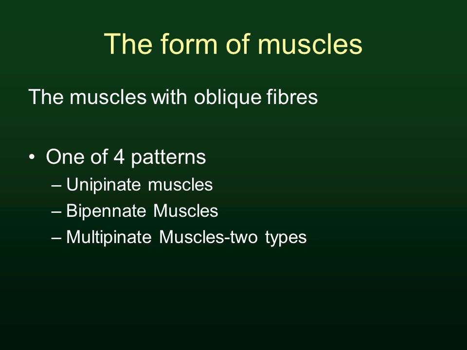 The form of muscles The muscles with oblique fibres One of 4 patterns –Unipinate muscles –Bipennate Muscles –Multipinate Muscles-two types