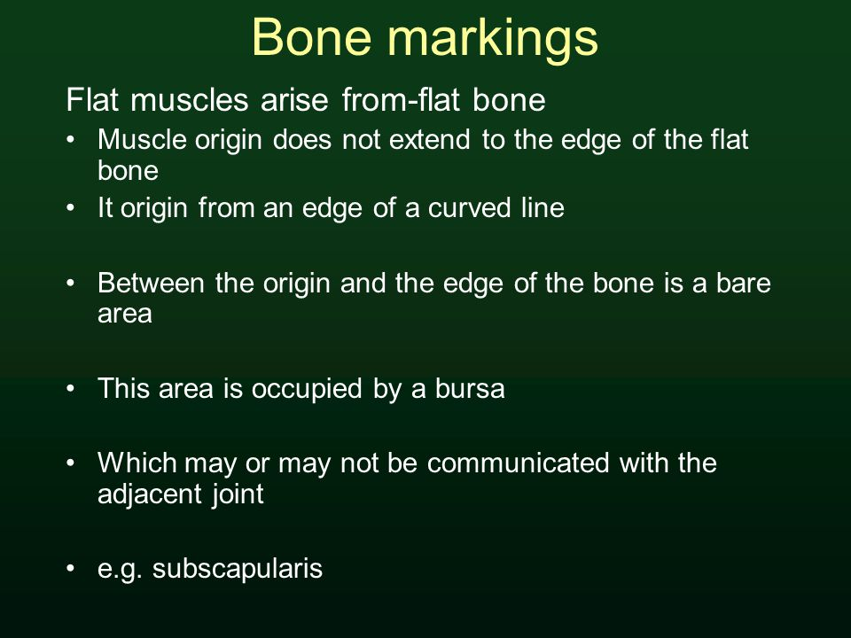 Bone markings Flat muscles arise from-flat bone Muscle origin does not extend to the edge of the flat bone It origin from an edge of a curved line Between the origin and the edge of the bone is a bare area This area is occupied by a bursa Which may or may not be communicated with the adjacent joint e.g.