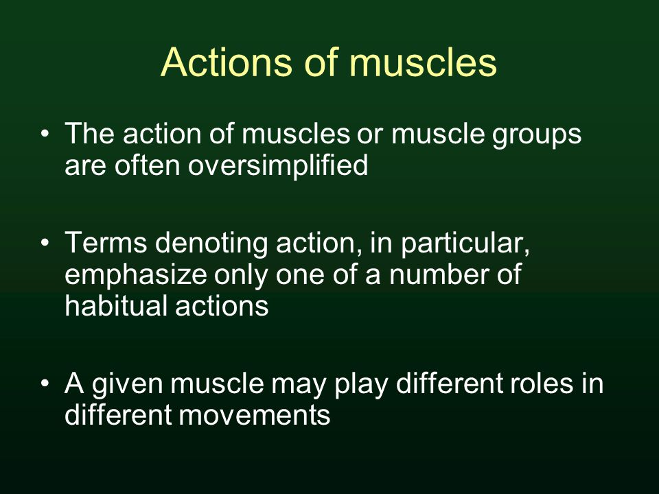 Actions of muscles The action of muscles or muscle groups are often oversimplified Terms denoting action, in particular, emphasize only one of a number of habitual actions A given muscle may play different roles in different movements