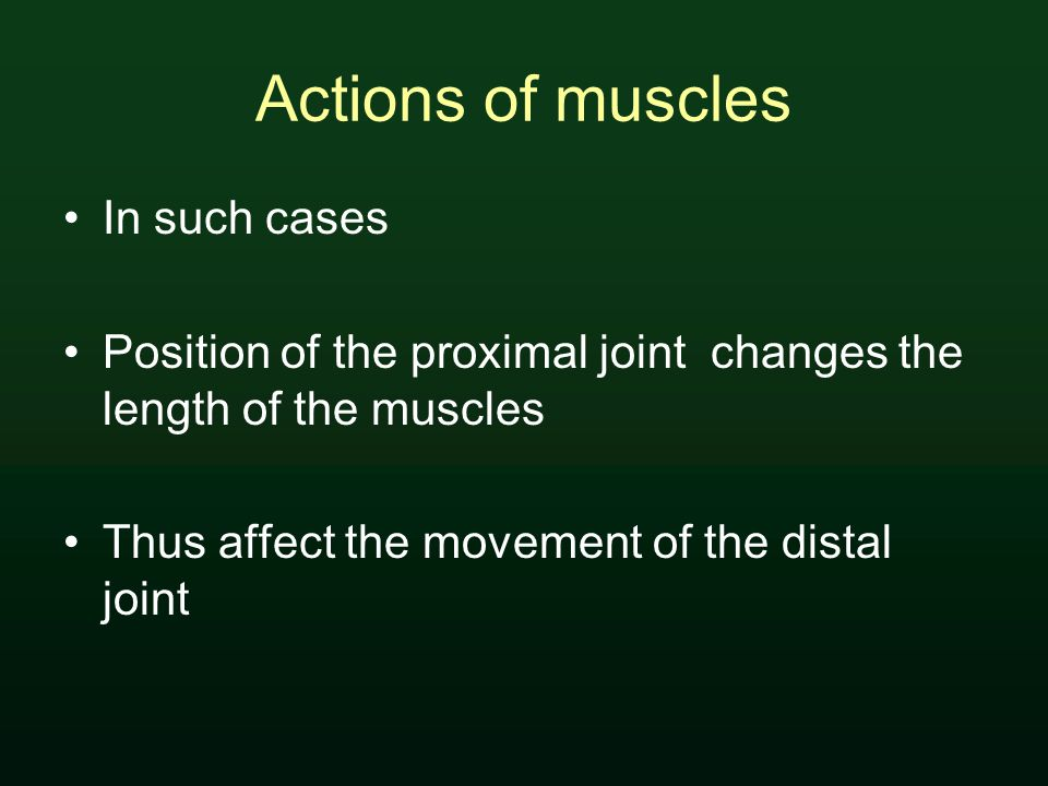 Actions of muscles In such cases Position of the proximal joint changes the length of the muscles Thus affect the movement of the distal joint