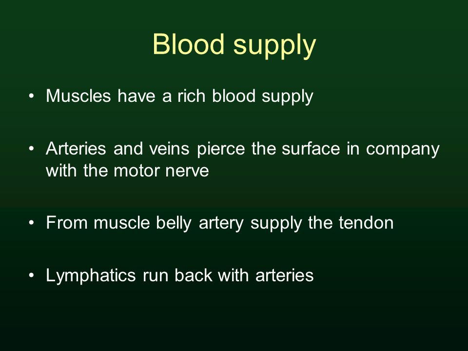 Blood supply Muscles have a rich blood supply Arteries and veins pierce the surface in company with the motor nerve From muscle belly artery supply the tendon Lymphatics run back with arteries