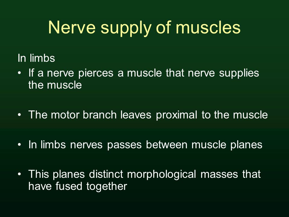 Nerve supply of muscles In limbs If a nerve pierces a muscle that nerve supplies the muscle The motor branch leaves proximal to the muscle In limbs nerves passes between muscle planes This planes distinct morphological masses that have fused together