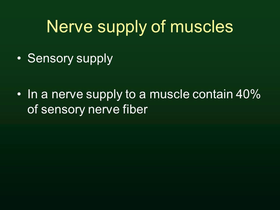 Nerve supply of muscles Sensory supply In a nerve supply to a muscle contain 40% of sensory nerve fiber