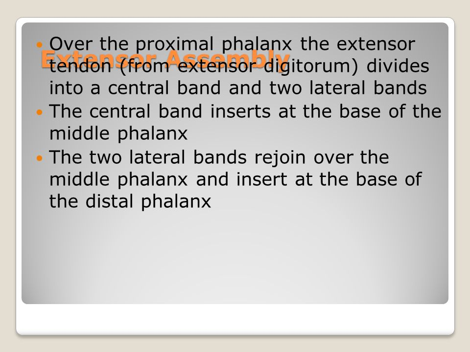 Extensor Assembly Over the proximal phalanx the extensor tendon (from extensor digitorum) divides into a central band and two lateral bands The centra