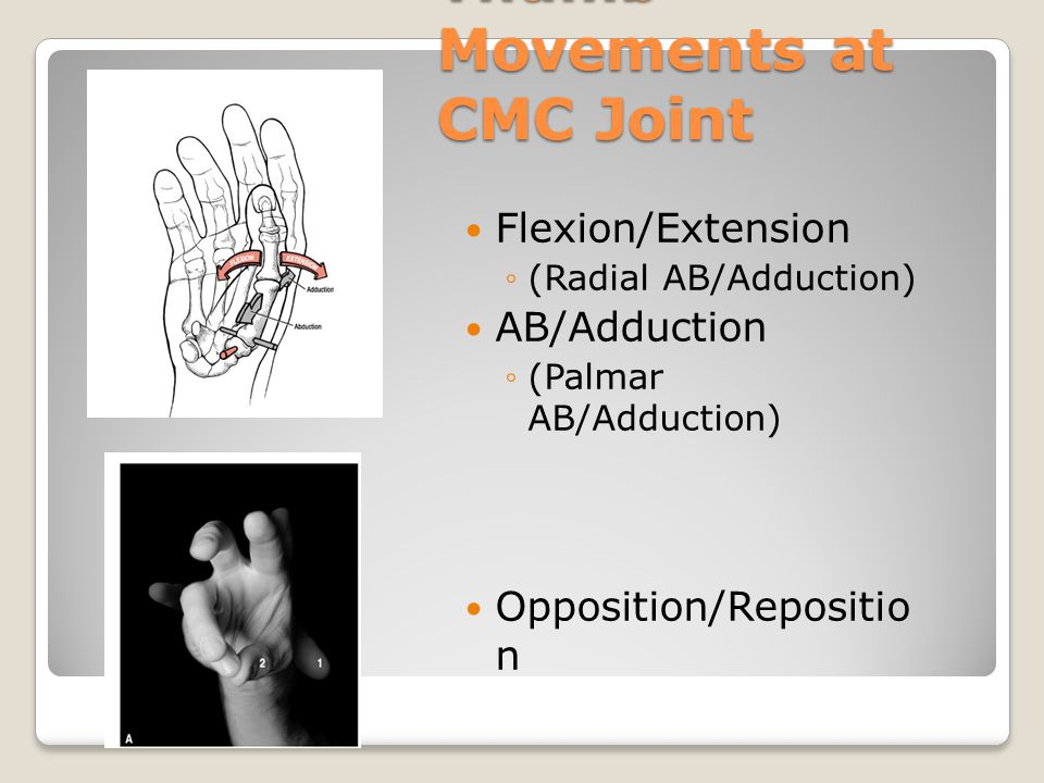 Thumb Movements at CMC Joint Flexion/Extension ◦(Radial AB/Adduction) AB/Adduction ◦(Palmar AB/Adduction) Opposition/Repositio n