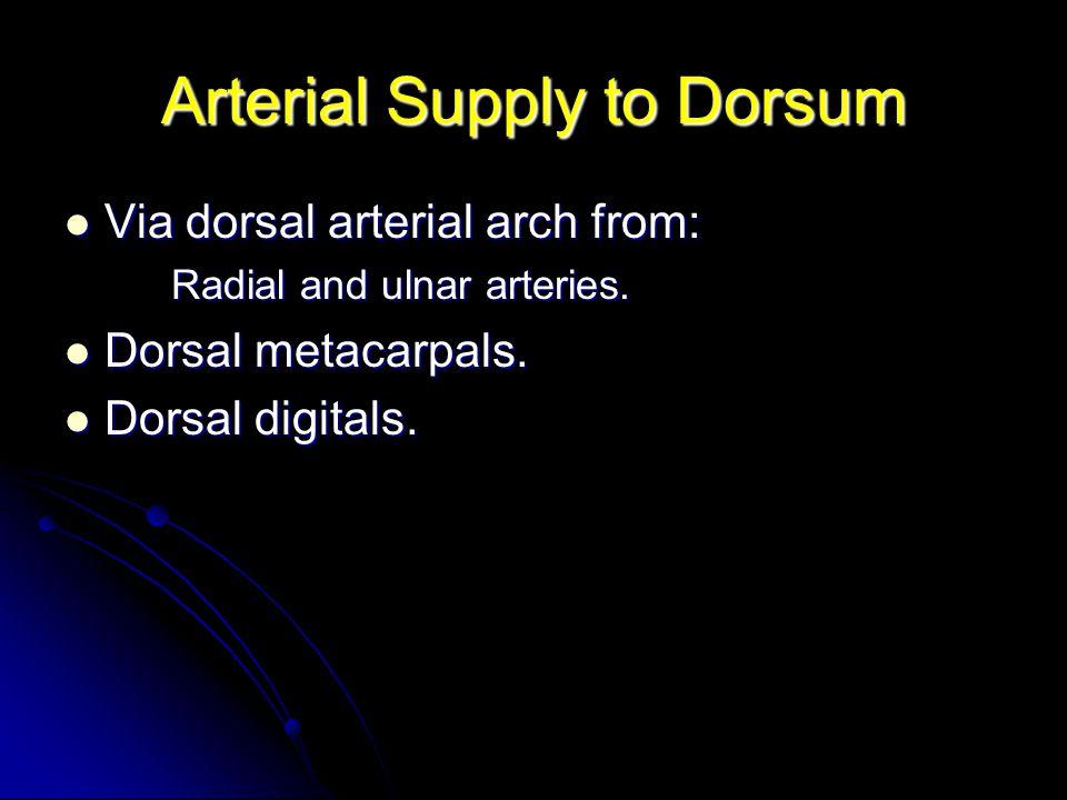 Arterial Supply to Dorsum Via dorsal arterial arch from: Via dorsal arterial arch from: Radial and ulnar arteries. Dorsal metacarpals. Dorsal metacarp