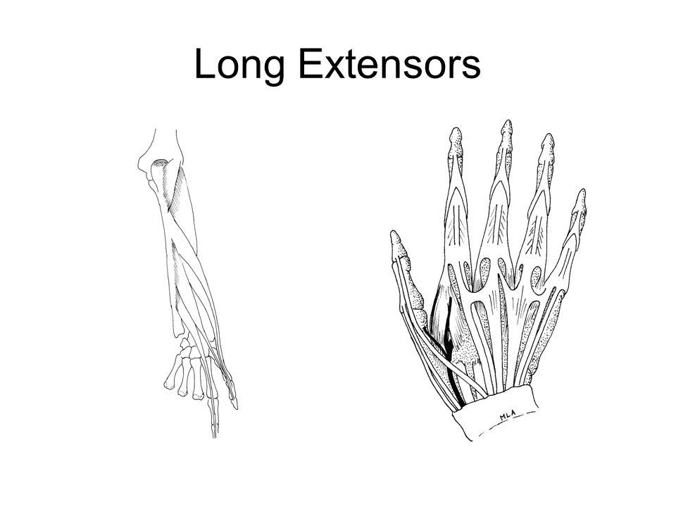 Long Extensors