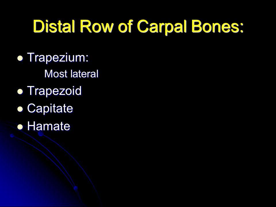 Distal Row of Carpal Bones: Trapezium: Trapezium: Most lateral Trapezoid Trapezoid Capitate Capitate Hamate Hamate