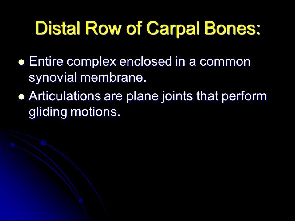 Distal Row of Carpal Bones: Entire complex enclosed in a common synovial membrane. Entire complex enclosed in a common synovial membrane. Articulation