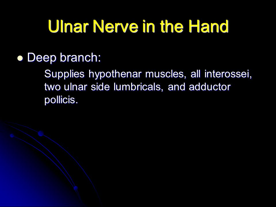 Ulnar Nerve in the Hand Deep branch: Deep branch: Supplies hypothenar muscles, all interossei, two ulnar side lumbricals, and adductor pollicis.