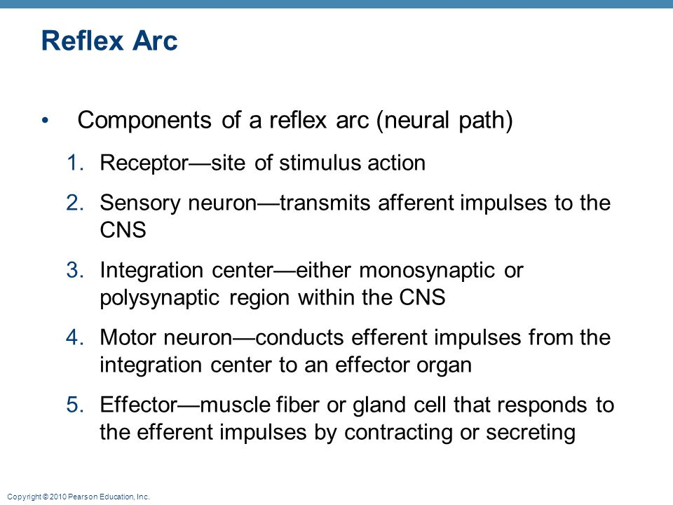 Copyright © 2010 Pearson Education, Inc. Reflex Arc Components of a reflex arc (neural path) 1.Receptor—site of stimulus action 2.Sensory neuron—trans